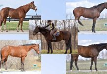 Adoptable Thoroughbreds and Standardbred from New Vocations