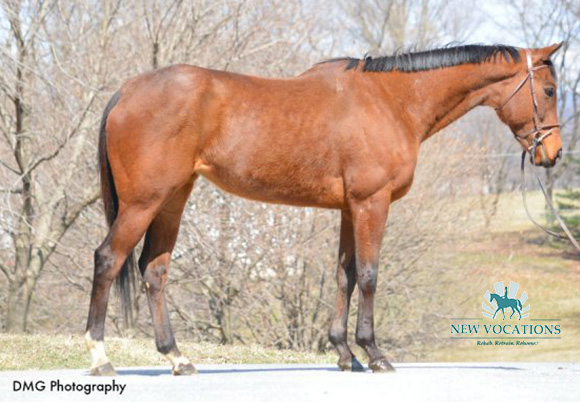 Only One Wish, an adoptable Thoroughbred at New Vocations in Hummelstown, Pennsylvania