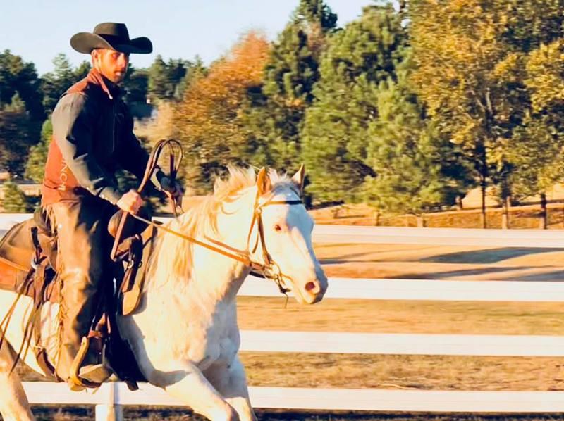 Rocky, an adoptable Appaloosa gelding located in Franktown, Colorado