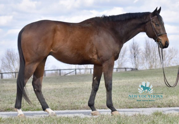 Summation Time, an adoptable Thoroughbred at New Vocations in Lexington, Kentucky