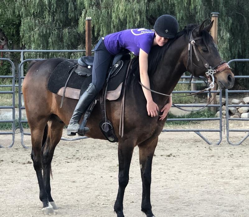 Viqtor, an adoptable Arabian gelding located in Acton, California.