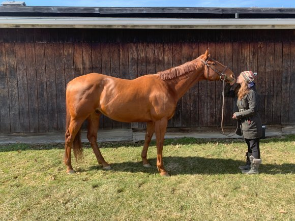 Adoptable Thoroughbred Down Market at New Vocations in Medina, Ohio