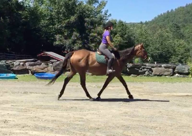Adoptable Thoroughbred Vizi Girl at Gerda's Equine Rescue in West Townshend, Vermont