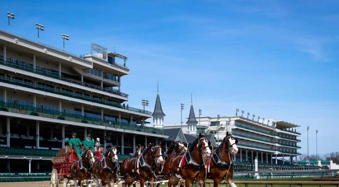 Budweiser Clydesdales at Churchill Downs