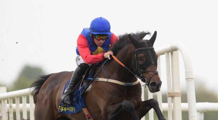 Hurdles racehorse Charle Brune