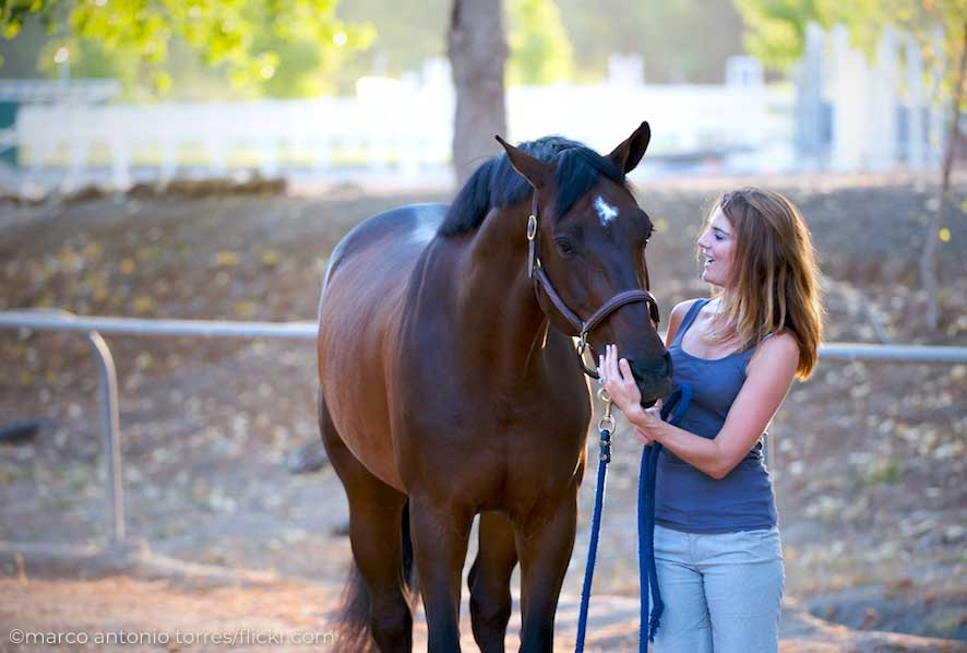 Woman standing with a bay horse