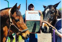Adoptable horses on the Help a Horse Home kickoff