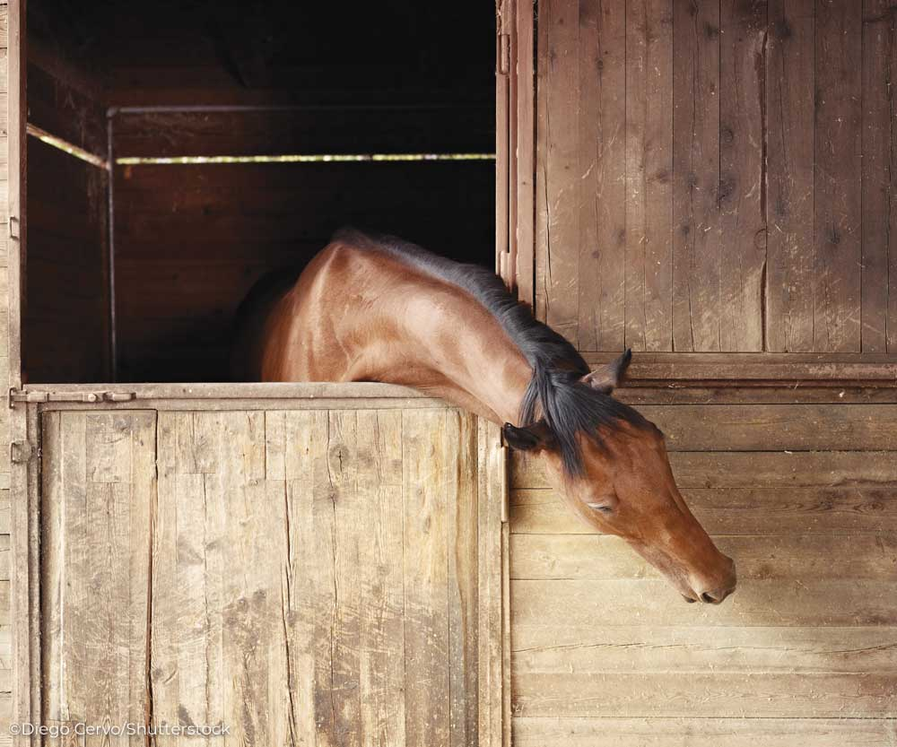 Horse reaching out of stall