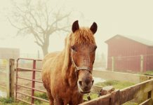 Days End Farm Horse Rescue Letters from H