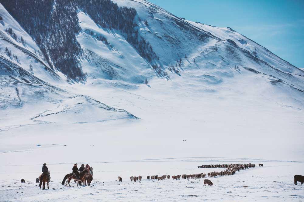 NOVA Horse Warriors