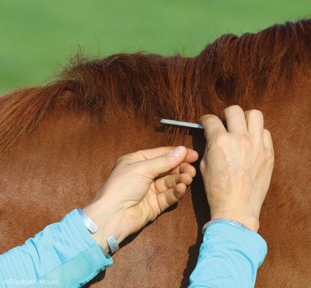 Pulling a horse's mane