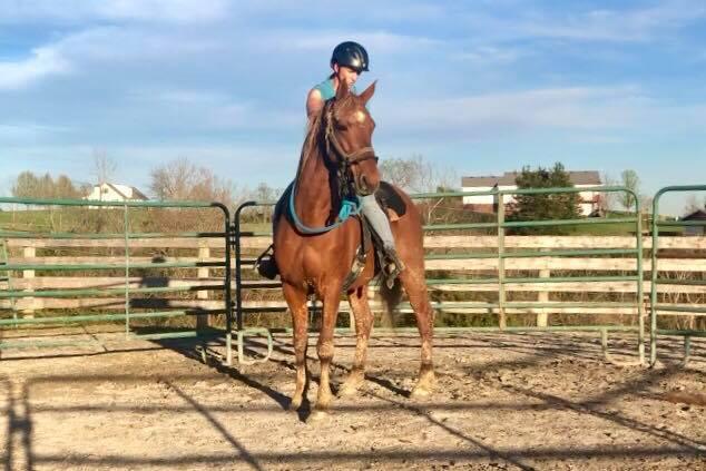 Bebe under saddle