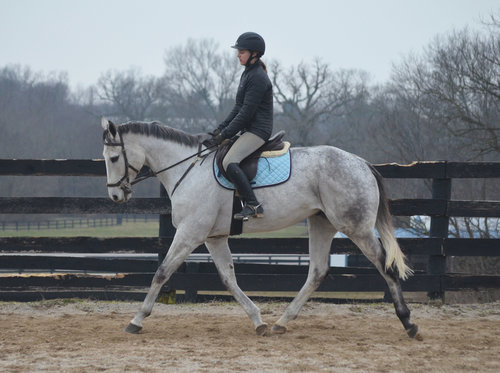 Iron Mane, an adoptable Thoroughbred gelding located in Illinois