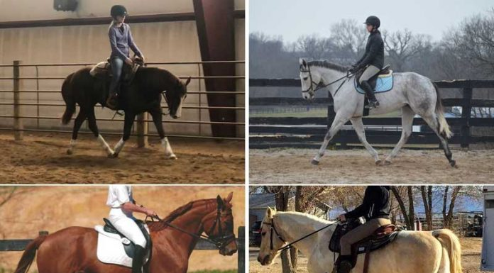 Adoptable dressage prospects