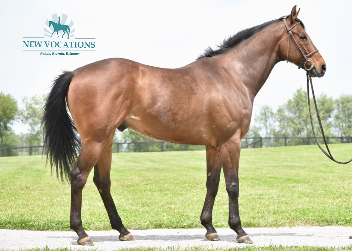 Dynamite Stick, an adoptable Thoroughbred located in Kentucky