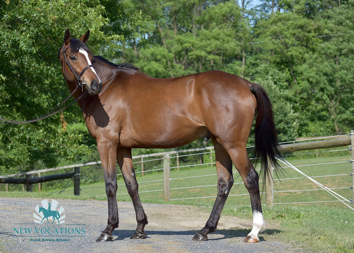 Jeremiah John, an adoptable Thoroughbred located in Pennsylvania