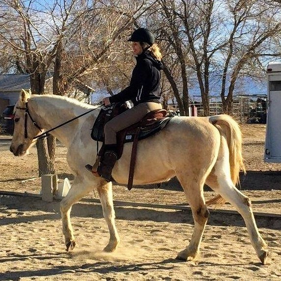 Kenos Dream Boat, an adoptable Arabian/Paint gelding located in California