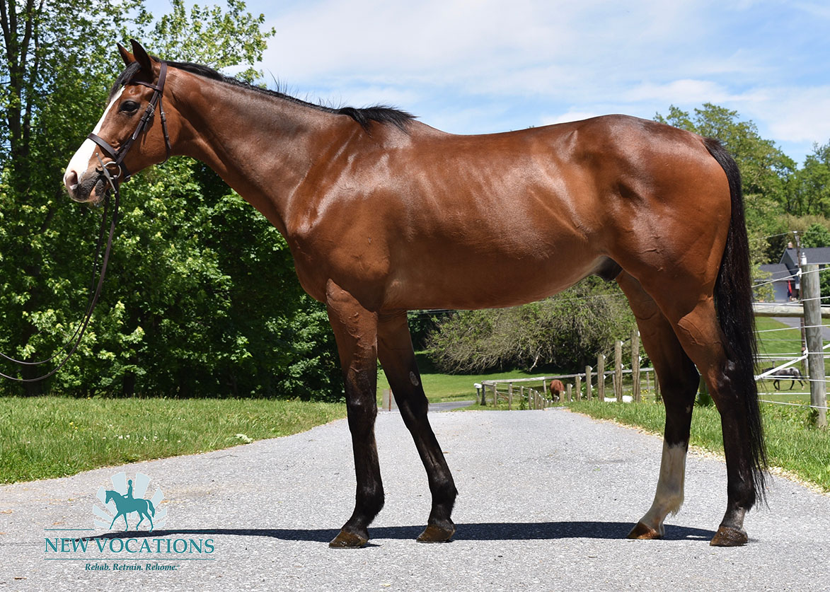 Religious Ed, an adoptable Thoroughbred located in Pennsylvania