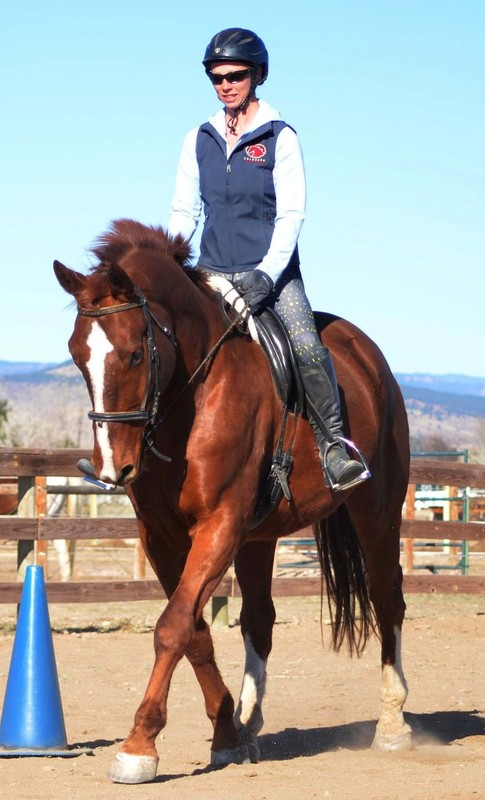 Sebastian, an adoptable Hanoverian located in Colorado