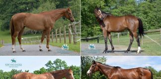 Adoptable Thoroughbred horses