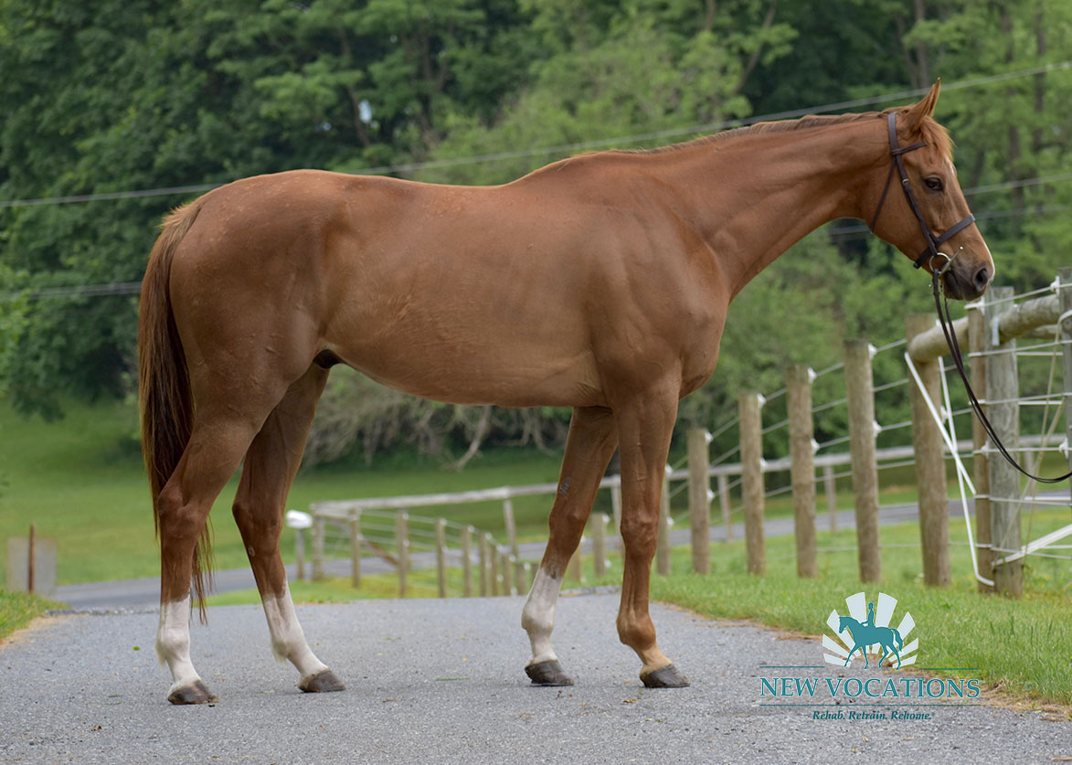 Trouble with Girls, an adoptable Thoroughbred located in Pennsylvania
