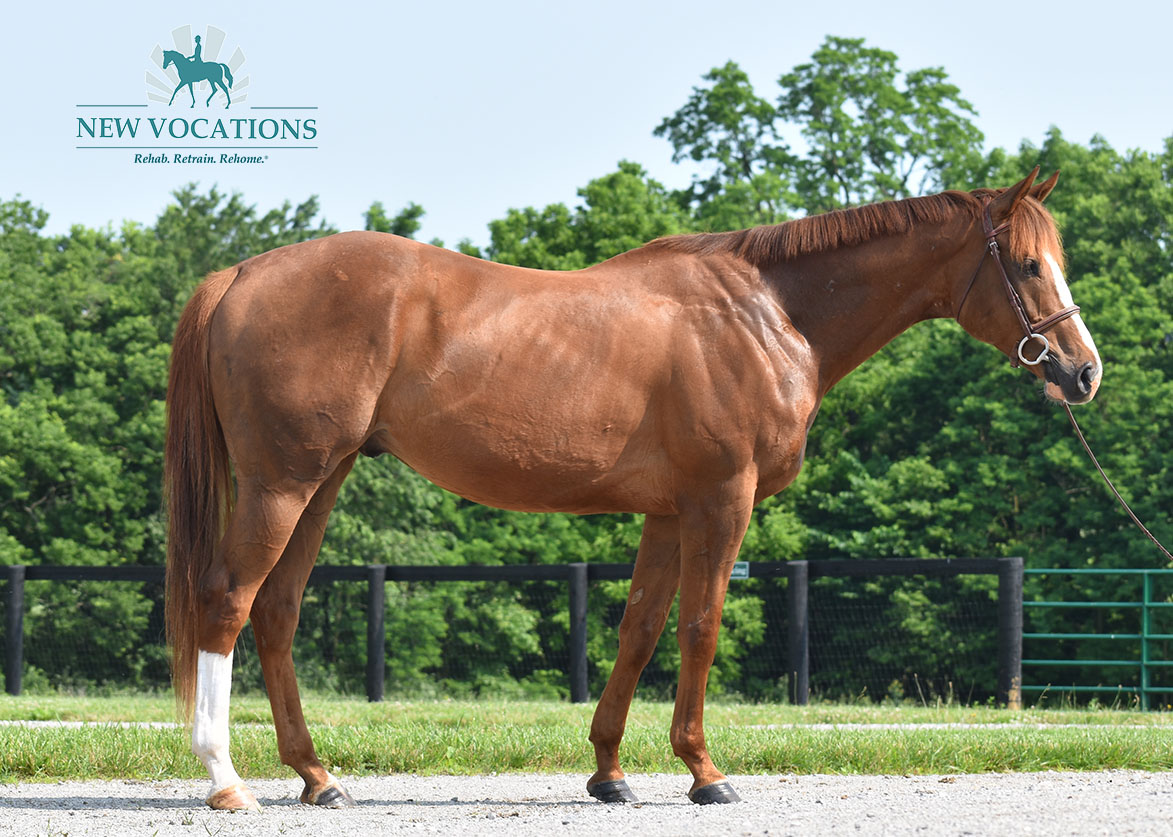 Tyndall, an adoptable Thoroughbred located in Kentucky