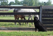 Mare and foal and barn dog