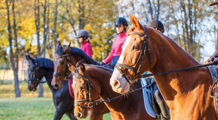 Group of English riders on a trail ride