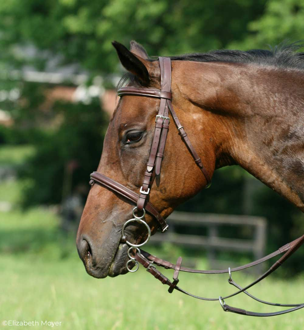 Horse wearing a three-ring bit