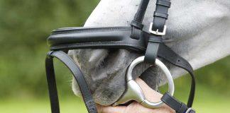 Bridleing a horse