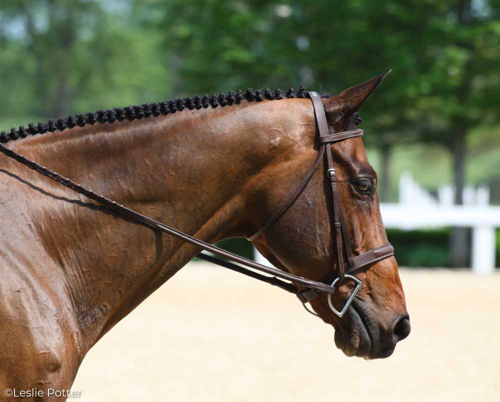 A bay hunter horse wearing a D-ring snaffle bit