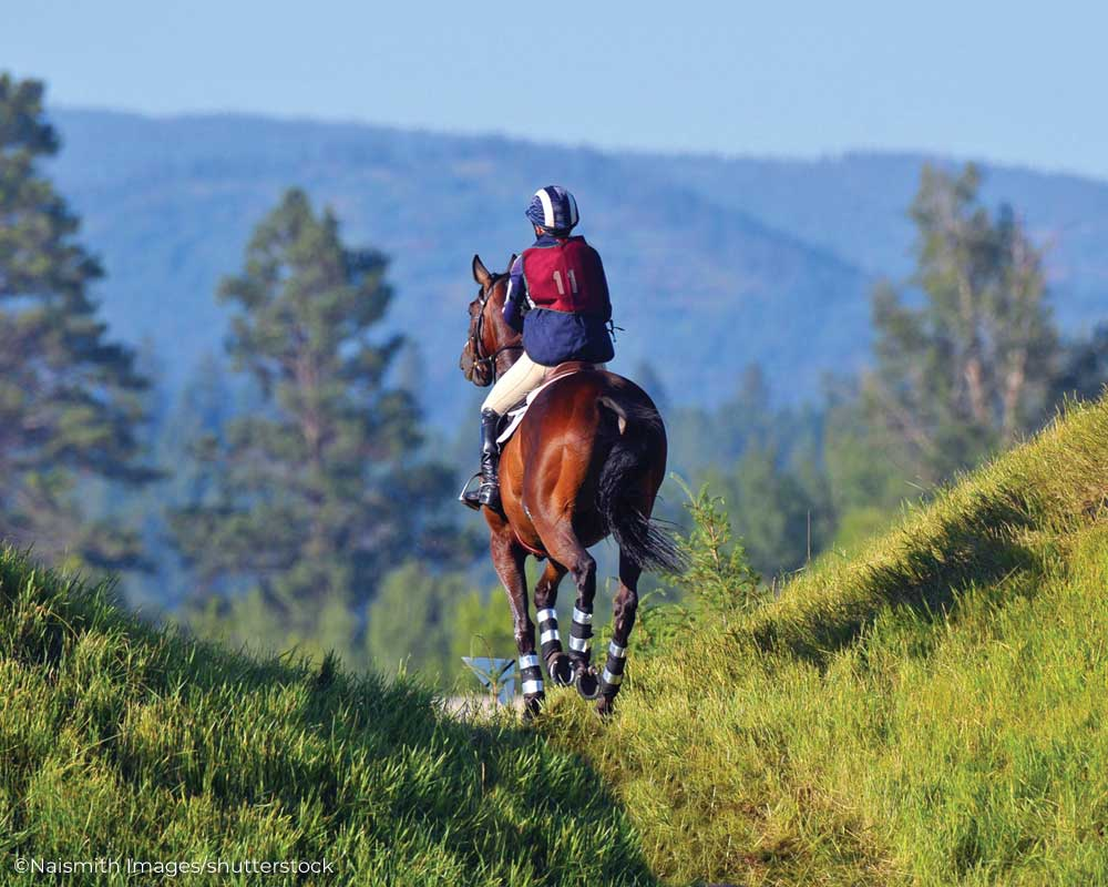 Eventing horse and rider