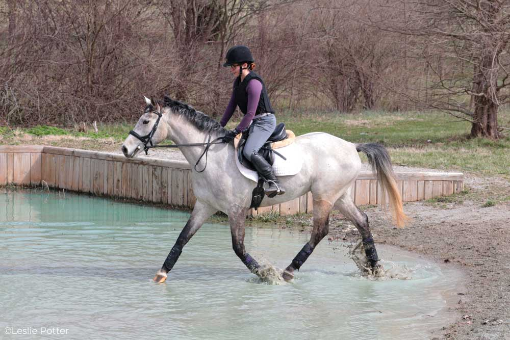 Trotting through a water obstacle