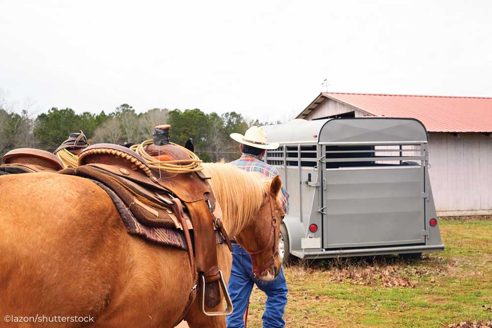 Western horses and horse trailer