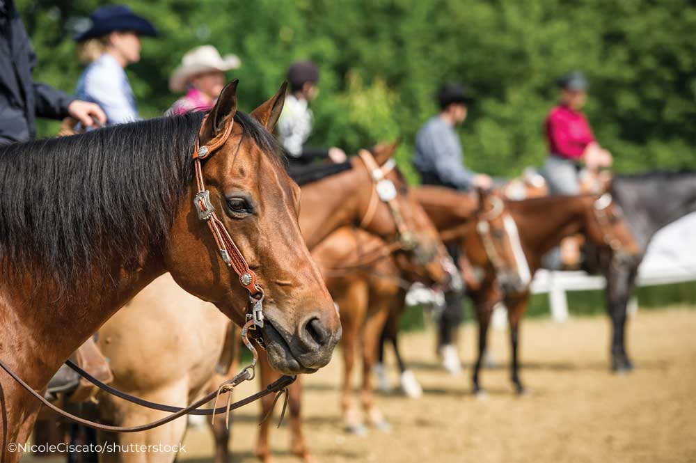 Western horse lineup at a horse show