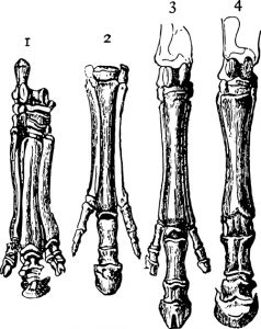 Illustration of horse hoofs