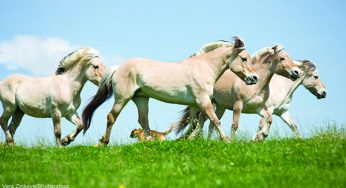 124 Best Horse Names – Horse Illustrated