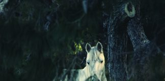 Backcountry horse rescue