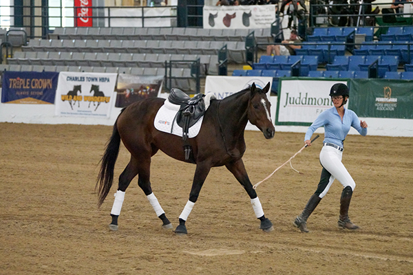 Amy Bowers and Grande Warrior