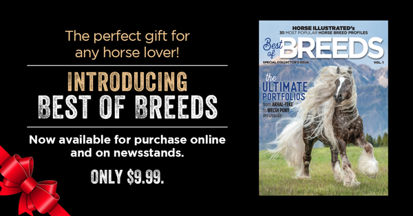 Best of Breeds Ad for Poll Page