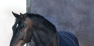 Horseware Ireland Rambo Ionic Collection