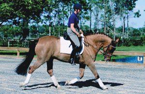 Horse and rider stretching circle.