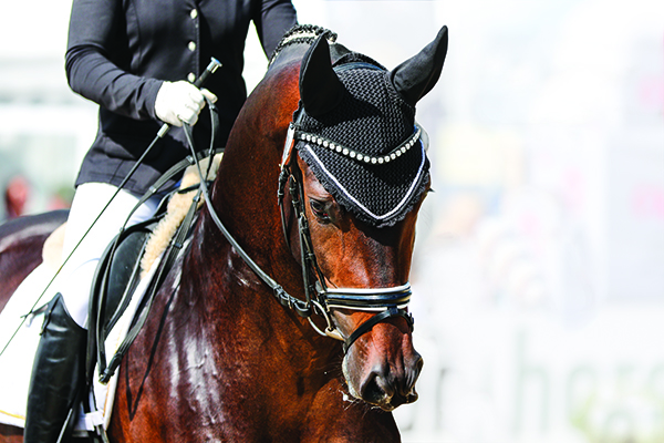 Horse in dressage