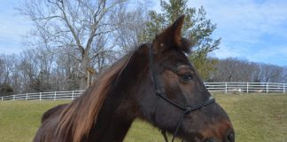 My Right Horse Adoptable Horse of the Week - Eugene