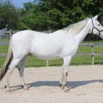 My Right Horse Adoptable Horse of the Week - Adam