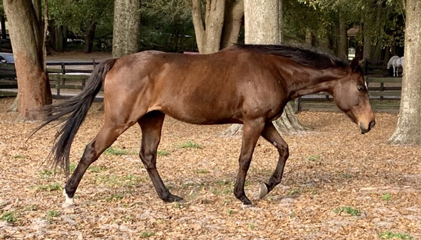 My Right Horse Adoptable Horse of the Week - Ariel