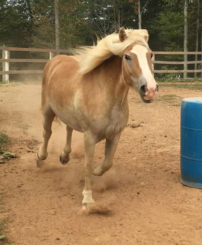 My Right Horse Adoptable Horse of the Week - Biscuit