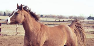 Adoptable Horse of the Week - Blossom