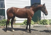 Adoptable Horse of the Week - Blue