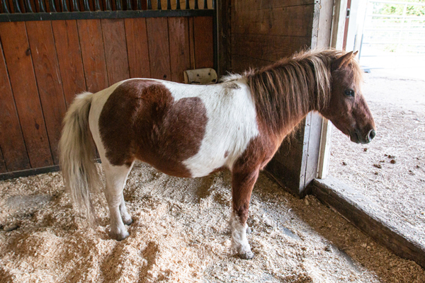 My Right Horse Adoptable Horse of the Week - Brownie